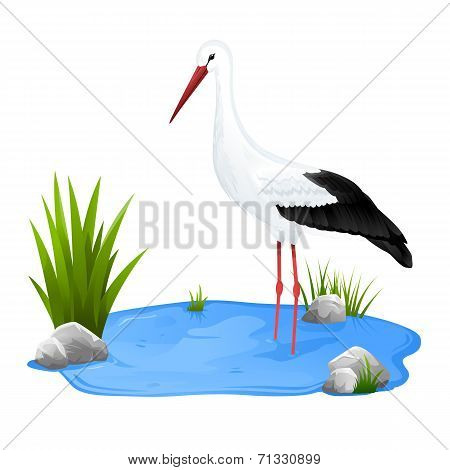 Small Pond With White Stork