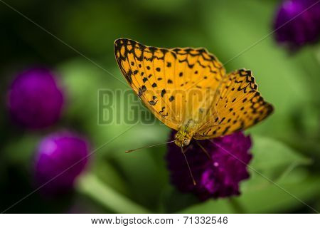 Beautiful butterfly in the garden