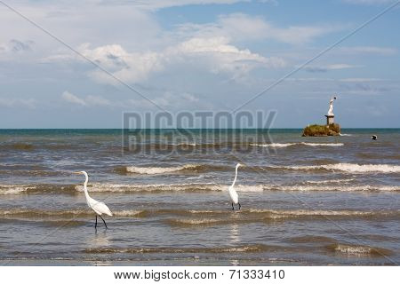 Herons And Pelicans Catching Fish On The Shore In Livingston Guatemala
