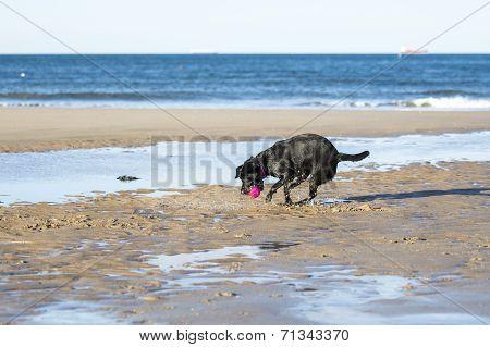 Dog Catching Ball On Sand