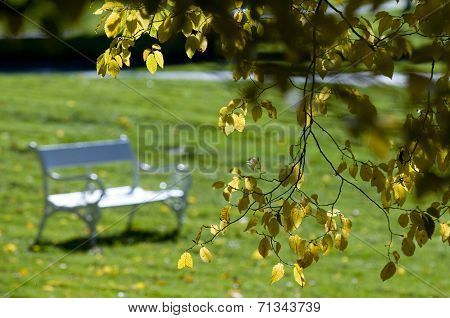 Autumnal Landscape With White Bench
