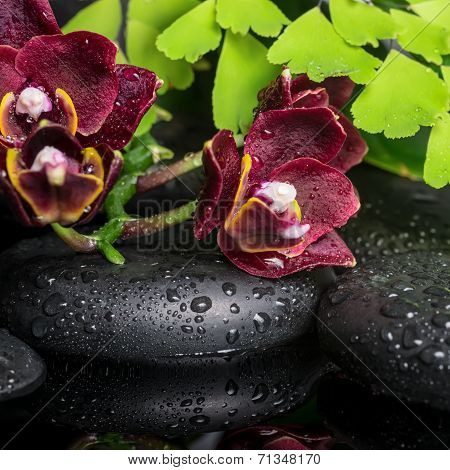 Beautiful Spa Setting Of Deep Cherry Orchid (phalaenopsis), Green Branch Of Fern Zen Stones With Dro