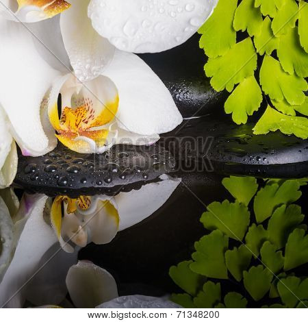Spa Concept Of White Orchid (phalaenopsis), Green Branch Of Maidenhair, Zen Stones With Drops And Re
