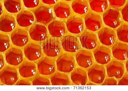 Fragment Of Honeycomb With Cells Full Of Honey
