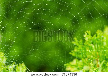 Catchy - a spider's web with green, natural background