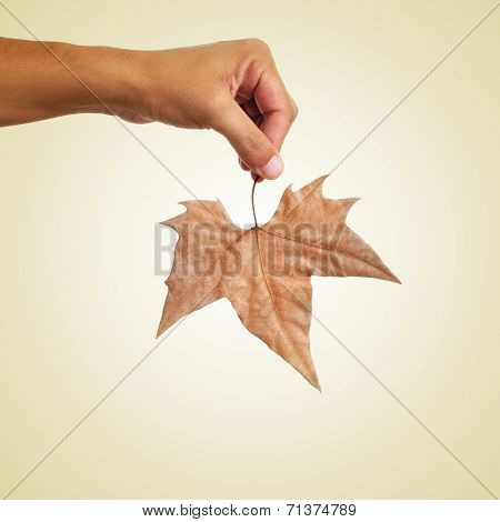 a man holding a dried leaf in autumn on a beige background, with a retro effect