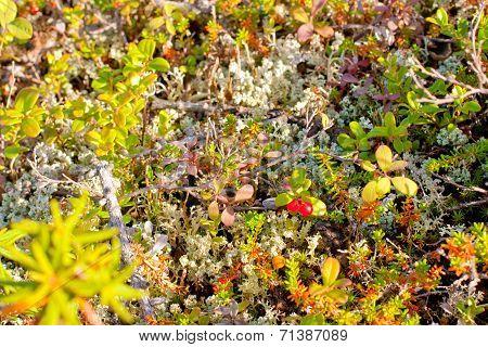 northern vegetation