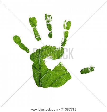 Green oak leaf. Closeup, isolated.