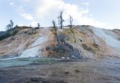 picture of mammoth  - Horizontal image of Mammoth Hot Springs in Northern part of Yellowstone National Park with dead trees blue skies and clouds in background - JPG