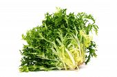 picture of escarole  - an escarole endive isolated on a white background - JPG