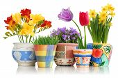 stock photo of pot plant  - Colorful spring flowers in fun ceramic containers isolated on white - JPG
