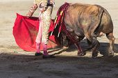 stock photo of bullfighting  - Bullfighter bullfighting with the crutch in the Bullring of Baeza Jaen province Andalusia Spain - JPG