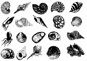Vector illustration of different  sea  shells