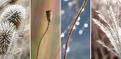 stock photo of pampas grass  - Collage  - JPG