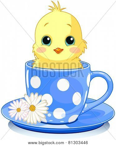 Domestic chicken sits in tea cup.