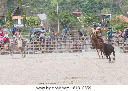 Banos, Ecuador - 30 November 2014: Young Latin Cowboys Chasing A Bull, Public Demonstration In South America In Banos On November 30, 2014