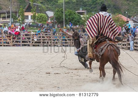 Banos, Ecuador - 30 November 2014: Young Latin Cowboys Chasing A Bull And Trying To Catch It With A Lasso, South America  In Banos On November 30, 2014