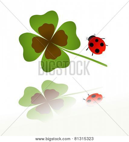 ladybird and shamrock leaf with reflection