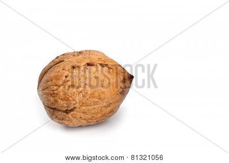 single fresh walnut isolated on a white background