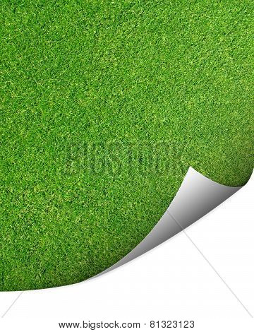 Green cut grass background with corner turned for copy space