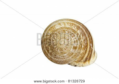 The Shell Of A Snail