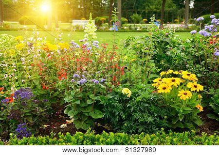 Multicolored flowerbed in park on sunny morning