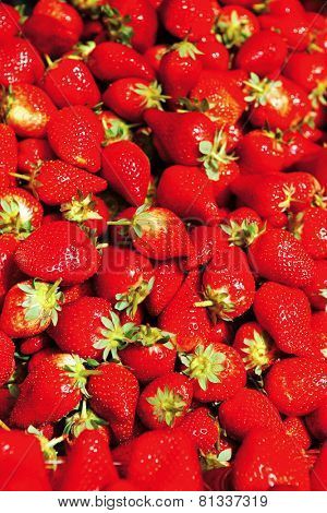 fresh raw lot of strawberries on counter