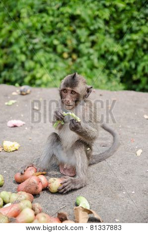 Thai Monkey Is Eating Fruits