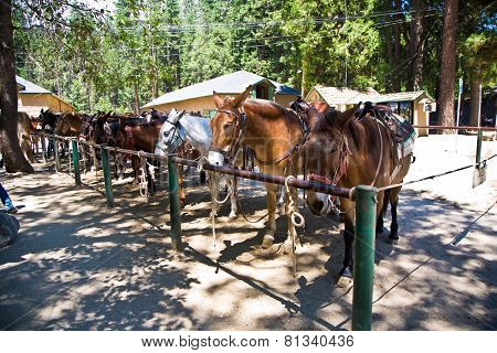 Horses For Excursions In Yosemite National Park