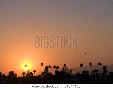 Scenic Sunset With Pelikans In Santa Barbara