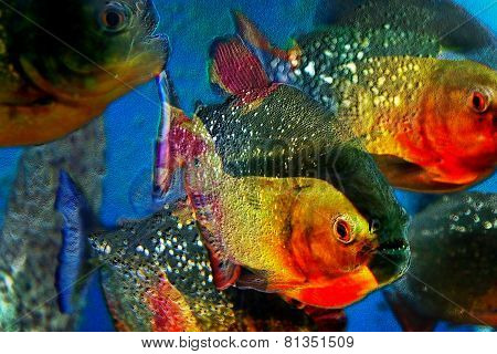 Multicolor Background With A Fishes Piranha