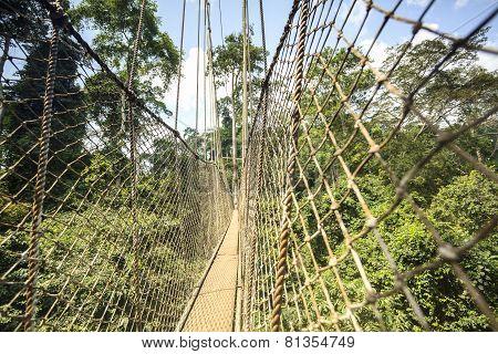 Canopy Walkway In Kakum National Park, Ghana, West Africa