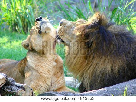 Animal Tenderness