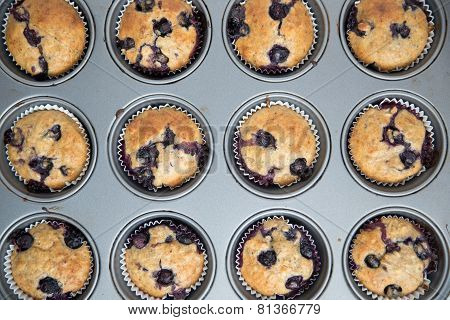 Home made freshly baked Blueberry Muffins