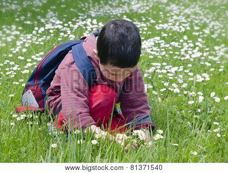 Child Picking Daises