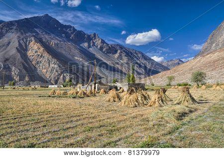 Crops In Tajikistan