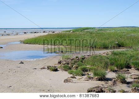 Beach And Coast At Isefjord In Denmark