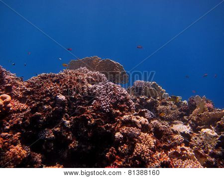 coral and blue background