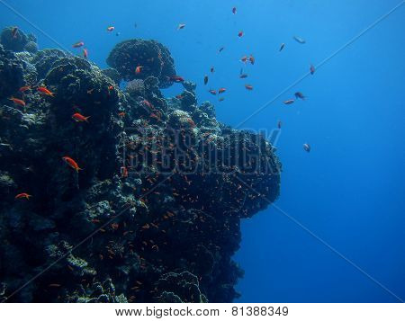 different fish in coral