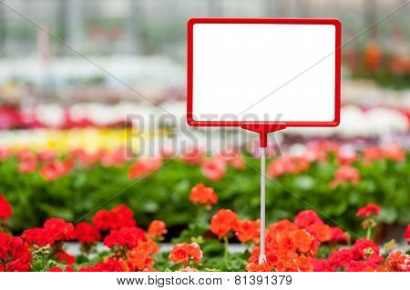 Copy Space In Flower Bed
