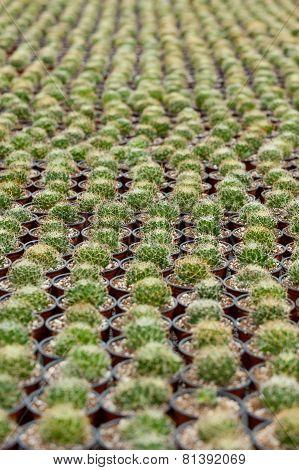 Cactus Bed.