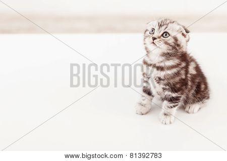 Cute Kitten Looking Up