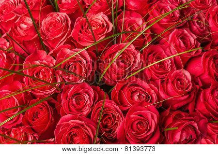 Big Bunch Of Beautiful Red Roses.