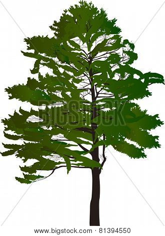 illustration with large green tree isolated on white background