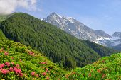 image of south tyrol  - View of the mountains from the valley Antholzertal - JPG