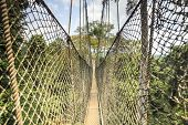 foto of canopy  - Canopy walkway in Kakum National Park Accra Region Ghana West Africa - JPG