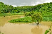 stock photo of flood  - River flooding green fields in Bangladesh - JPG
