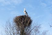 pic of stork  - A stork nests in his self - JPG