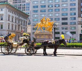 foto of carriage horse  - Central Park horse carriage rides in Manhattan New York US - JPG