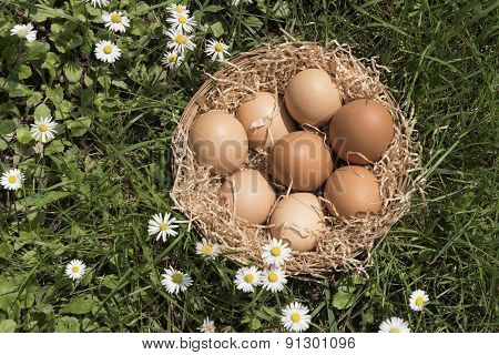 Eggs And Lawn